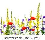 wildflowers  linaria vulgaris ... | Shutterstock . vector #454864948