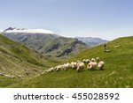 sheepherder and sheep in the... | Shutterstock . vector #455028592