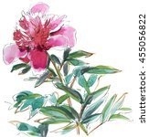 pink peony with foliage on... | Shutterstock . vector #455056822