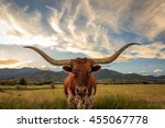 texas longhorn steer in rural... | Shutterstock . vector #455067778
