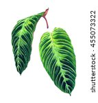 Set Of 2 Tropical Leaves....