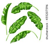 banana leaves set. image of... | Shutterstock .eps vector #455207596