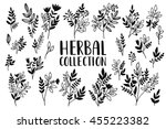 herbs and twigs set for your... | Shutterstock .eps vector #455223382
