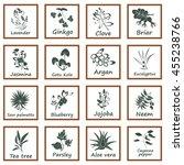 collection of ayurvedic herbs | Shutterstock .eps vector #455238766