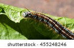 colorful caterpillar crawling... | Shutterstock . vector #455248246
