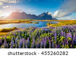 Blooming Lupine Flowers On The...