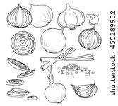 vector onion  set of  hand... | Shutterstock .eps vector #455289952
