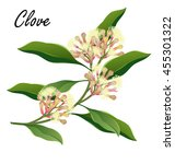 clove  tree branch with flowers ... | Shutterstock .eps vector #455301322