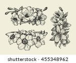 flower. hand drawn sketch... | Shutterstock .eps vector #455348962