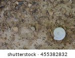 set up of single white snail... | Shutterstock . vector #455382832