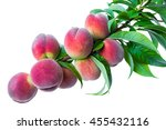 Branch With Ripe Fruits Peach...