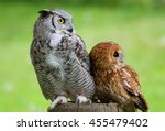 Tawny Owl  Strix Aluco  And...