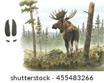 Adult European Moose   Elk Bul...
