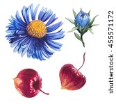 watercolor flowers blue and red | Shutterstock . vector #455571172
