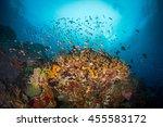 underwater view with... | Shutterstock . vector #455583172