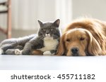 Stock photo dogs and cats snuggle together 455711182