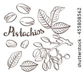 pistachio nuts with leaves and...   Shutterstock . vector #455808562