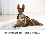 Stock photo cute cat and funny dog on carpet 455849038