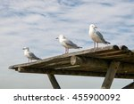 Three Silver Sea Gulls On Top...