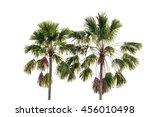 Three Coconut Palm Trees...