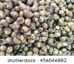 a background of shellfish on... | Shutterstock . vector #456046882