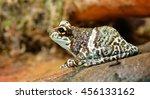 colorful frog in terrarium | Shutterstock . vector #456133162