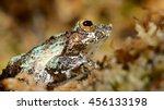 frog in terrarium | Shutterstock . vector #456133198