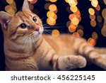 Red cat with christmas light bokeh backdrop
