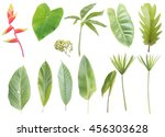 Set Tropical Leaves Isolated White - Fine Art prints