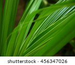 coconut fronds of the palm... | Shutterstock . vector #456347026