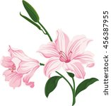 blooming lily flowers. floral... | Shutterstock .eps vector #456387955