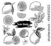 vector lemons hand drawn sketch.... | Shutterstock .eps vector #456420322