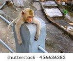 Baby Monkey Rest