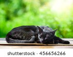 Stock photo black cat sleep in sunny day with green bokeh background cat portrait is summer garden background 456656266