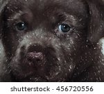 Drawing Dog  Portrait. Labrador.