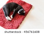 Cat Sleeping On Red Carpet ...