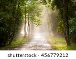 the green forest in thailand | Shutterstock . vector #456779212