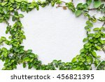 green plant on the cement...   Shutterstock . vector #456821395
