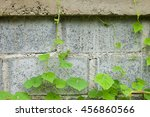 Small photo of green leaf adhere on wall