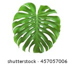 Monstera Leaf Isolated On Whit...