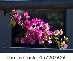 showy ornamental bracted ... | Shutterstock . vector #457202626