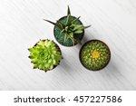 Different Succulents And Cactu...