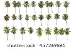 Difference Coconut Tree Isolated White - Fine Art prints