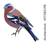 illustration of a chaffinch | Shutterstock . vector #457282198