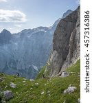 Small photo of Alpine ibex playing and relaxing in the mountains in Julian Alps in Slovenia.