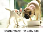 Stock photo dog and cat eating together 457387438