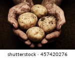 Potatoes In Male Hands On Soil...