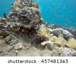 small fish surround a coral... | Shutterstock . vector #457481365