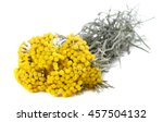 helichrysum flowers isolated on ... | Shutterstock . vector #457504132