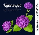 hydrangea   Shutterstock .eps vector #457548586